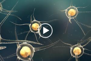 Boyalife stem cell animation
